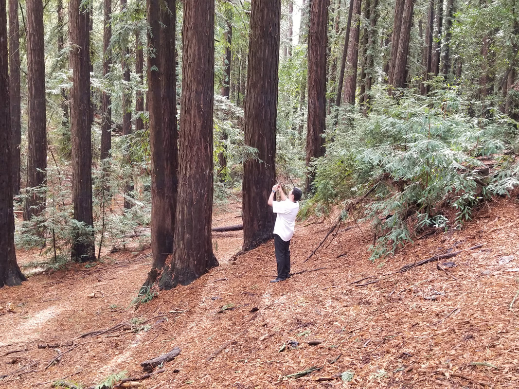 The Redwood Regional Park and a person taking a picture of a tree